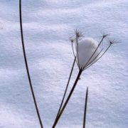 gallery-winter-03
