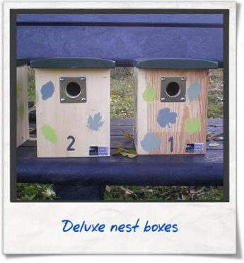 photo-diary-nest-box-02