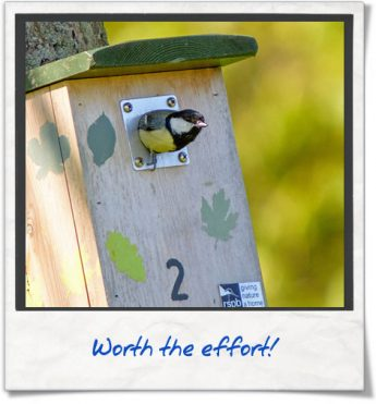 photo-diary-nest-box-05